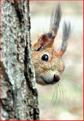 Voverė (3).jpg